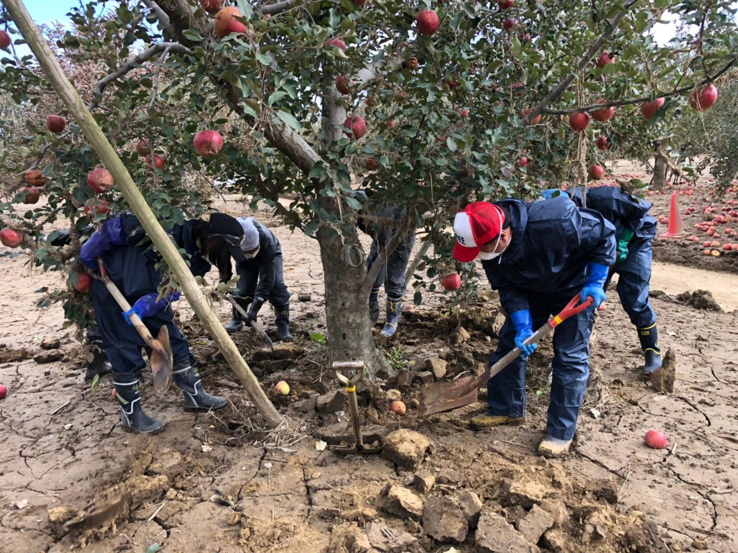 りんごの木、救出大作戦