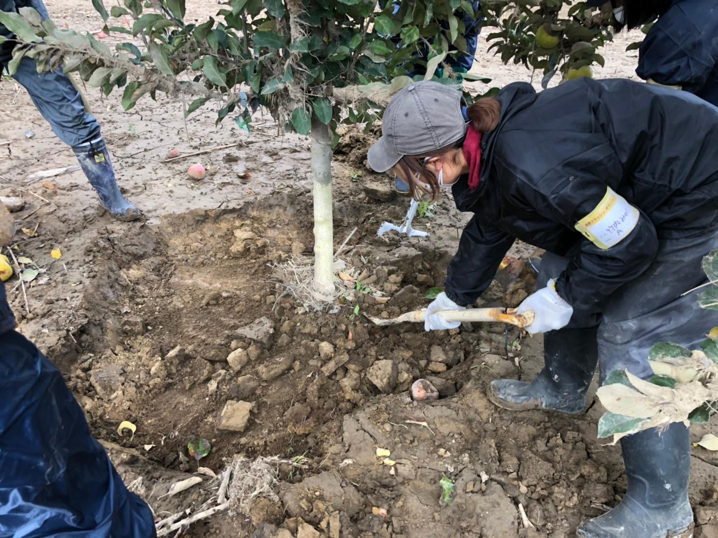 被災した果実樹への応急作業方法
